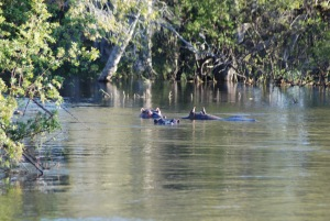 Zambia May 2014 Zoom 044